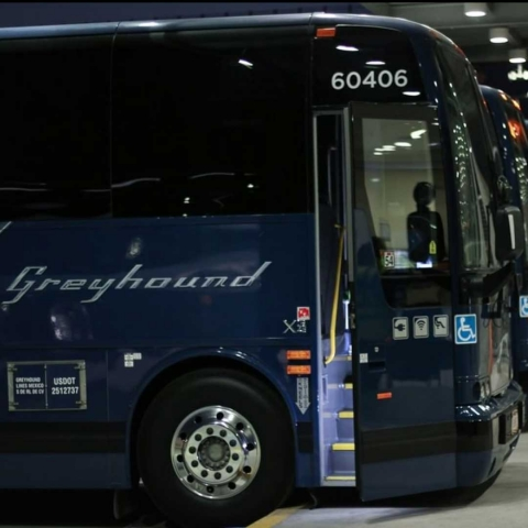 Row of Greyhound Buses